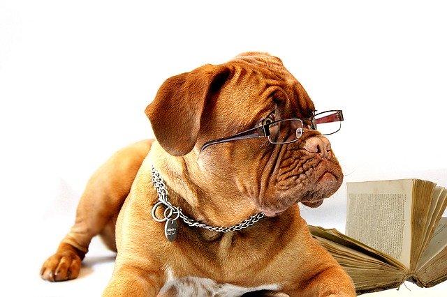 犬の画像|KEN'S BUSINESS(ケンズビジネス)|職場問題の解決サイト中間管理職・サラリーマン・上司と部下の「悩み」を解決する情報サイト