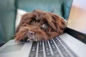 犬とパソコンの写真 KEN'S BUSINESS ケンズビジネス 職場問題の解決サイト中間管理職・サラリーマン・上司と部下の「悩み」を解決する情報サイト